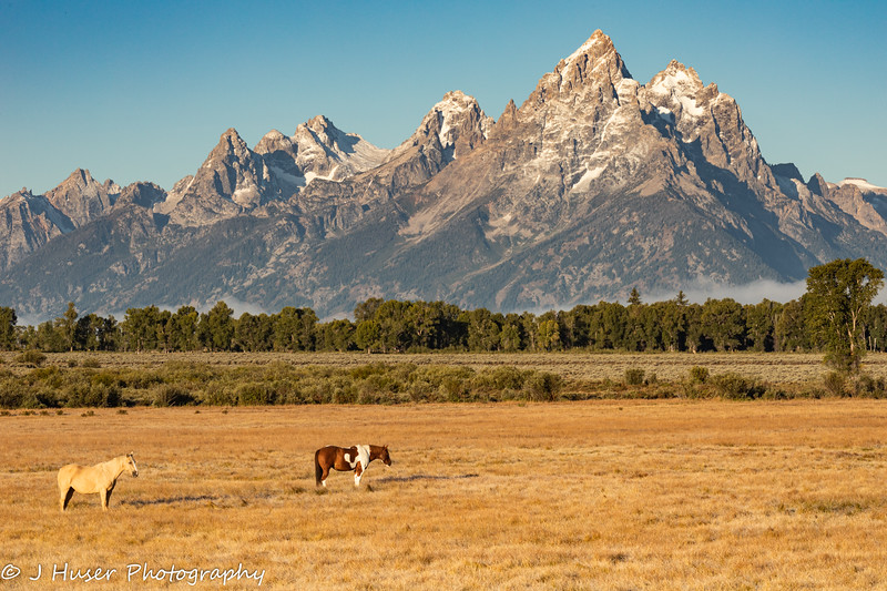 Two horses in front of Teton mountains