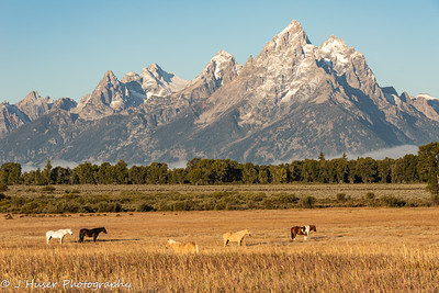 Horses in front of the Teton mountains