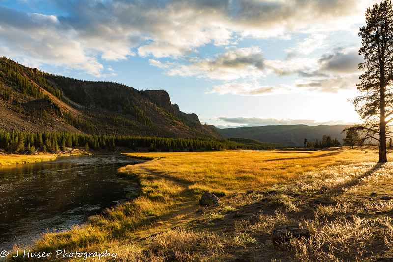 Golden evening light along the Madison river in Yellowstone NP