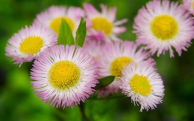 Summer flowers in the lower meadow