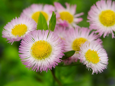 PinkFlowers_5-7-12_1024