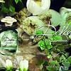 Dolce&Gabbana_DOLCE_Creative Packshot