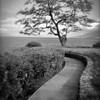 Wailea walk
