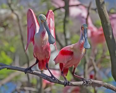 Large wading birds