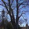 11-16 Trees 7