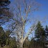 11-16 Trees 4