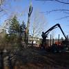 11-16 Trees 1