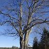 11-16 Trees 3