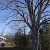 11-16 Trees 2