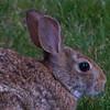 rabbit        211