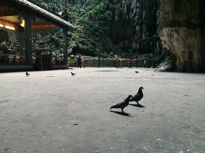 Les stars de Batu Cave...