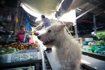 Je l'adore ce chien ! Il habite sur le marché.