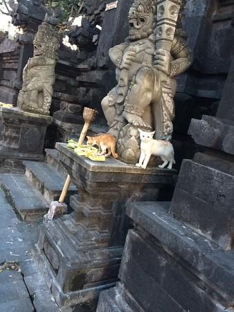 Des temples partout, mais aussi des chats voleurs d'offrandes :)