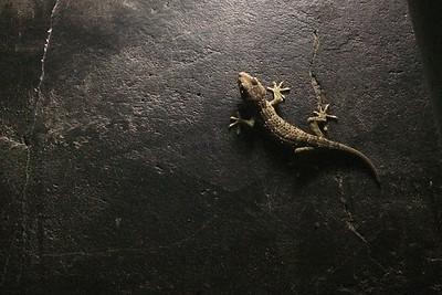 Gecko géant à Tanah Lot