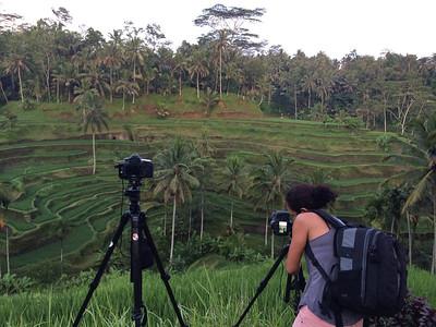 Les fameuses rizières de Bali !
