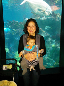 First visit to the aquarium