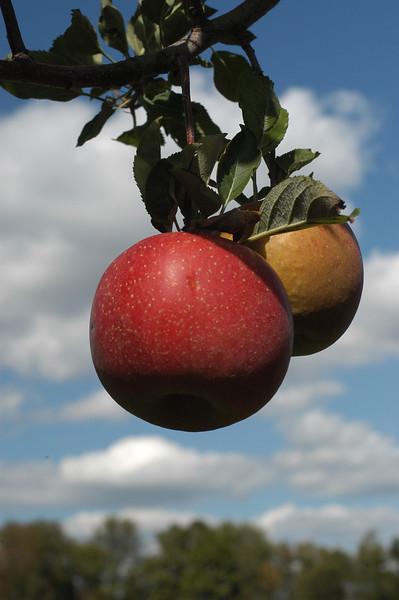 Beckwiths Kent Ohio apples