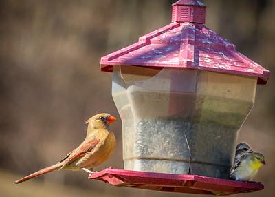 Becky's Birdfeeder-2