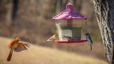 Becky's Birdfeeder-4