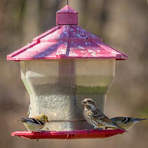 Becky's Birdfeeder-3