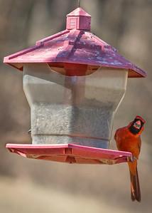 Becky's Birdfeeder-5