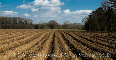 Potato fields near Chicksands, Bedfordshire