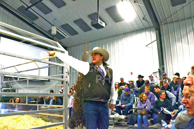 An auctioneer responds to bids at the beef sale on Cattleman's Day on Friday, March 2, 2018, at the Stanley Stout Center, 2200 Denison Ave. (Tiffany Roney | Collegian Media Group)