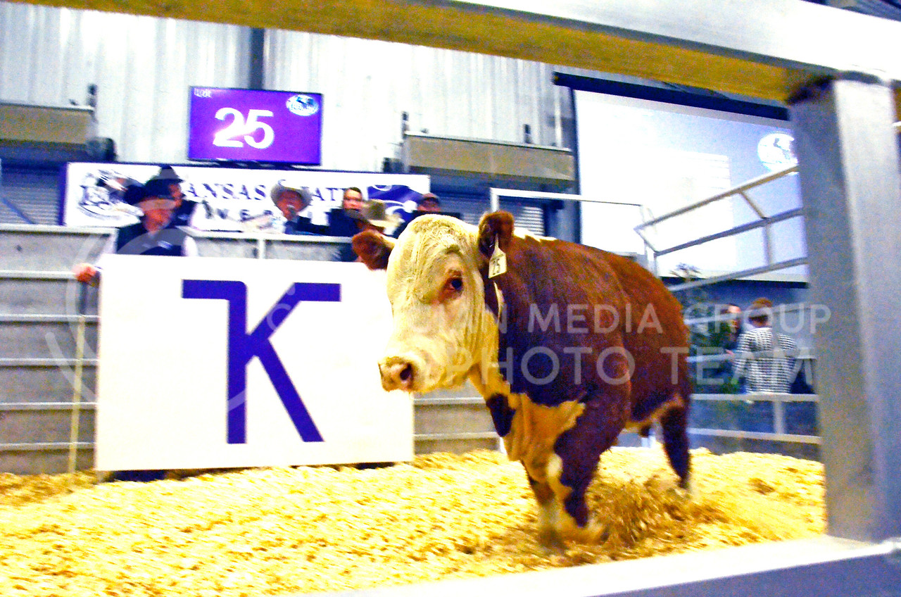 A bovine paces in the show pen at the beef sale on Cattleman's Day on Friday, March 2, 2018, at the Stanley Stout Center, 2200 Denison Ave. (Tiffany Roney   Collegian Media Group)