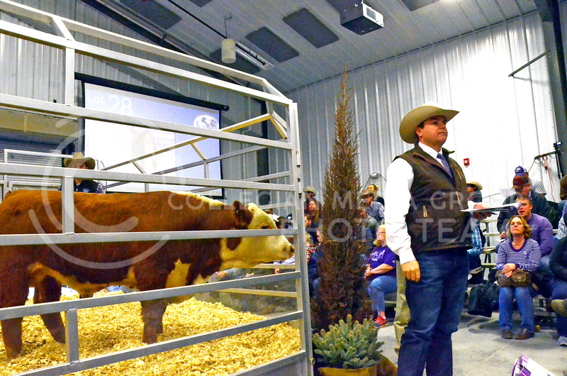 An auctioneer watches for bids at the beef sale on Cattleman's Day on Friday, March 2, 2018, at the Stanley Stout Center, 2200 Denison Ave. (Tiffany Roney | Collegian Media Group)