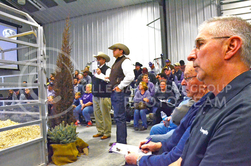 Attendees and auctioneers keep their eyes on the show pen at the beef sale on Cattleman's Day on Friday, March 2, 2018, at the Stanley Stout Center, 2200 Denison Ave. (Tiffany Roney | Collegian Media Group)