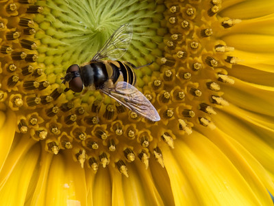 Bees & Bugs