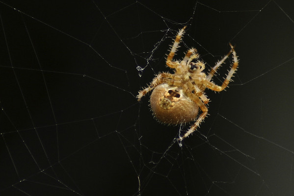 Spiders... icky, but interesting