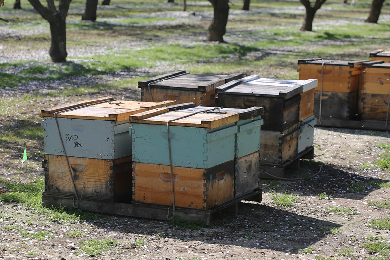 Honey Bee Hive Boxes