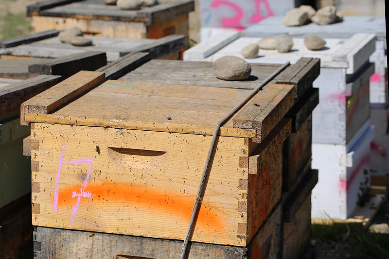 Honey Bee Hive Boxes (Apis mellifera)