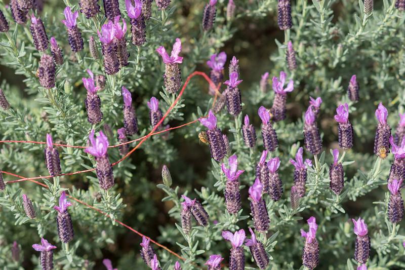 Bee PIC at f/4