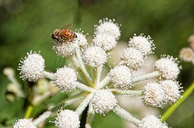 flower-bee-2
