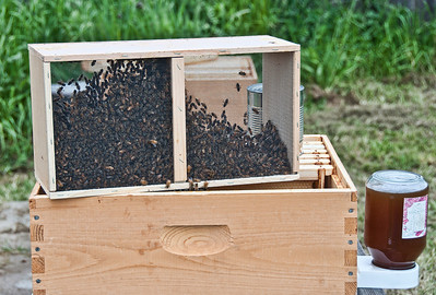 bee-hive-2-Edit