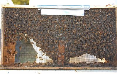 bee-hive-2