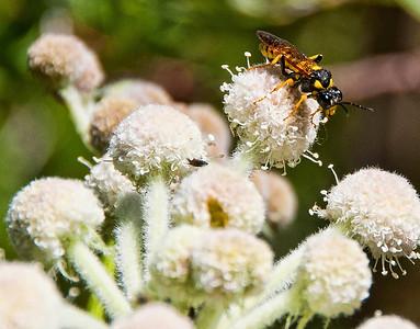 hornet-flower