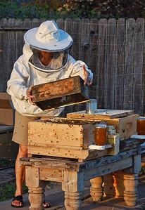 bee-keeper-hive-4