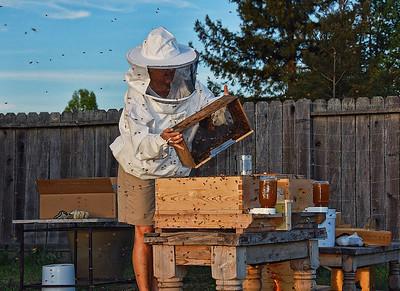 bee-keeper-hive-5