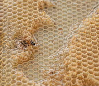honey-bee-comb-1