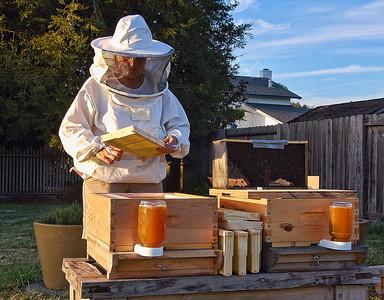 bee-keeper-hive