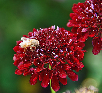 red-flower-bee