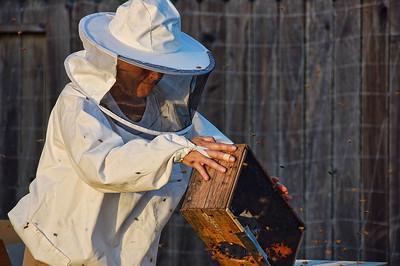 bee-keeper-hive-3