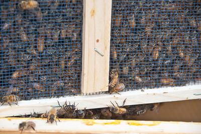bee-hive-4