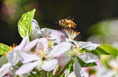 bee-flower-pollen