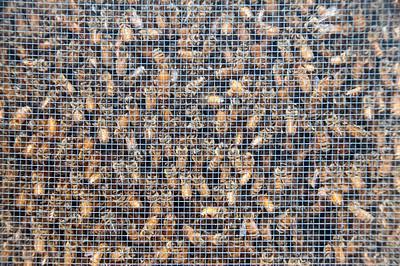 bee-hive-3