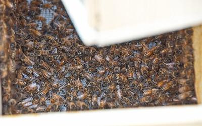 bee-hive-3-Edit