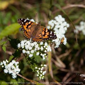 015-butterfly-wdsm-05sep17-09x09-006-1312